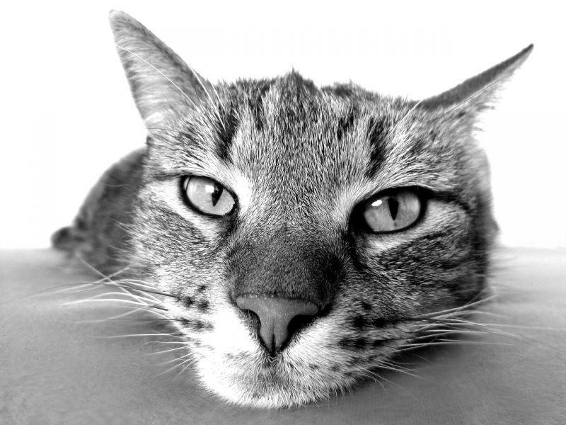 Questa particolare melodia sembra essere molto apprezzata dai nostri amici felini